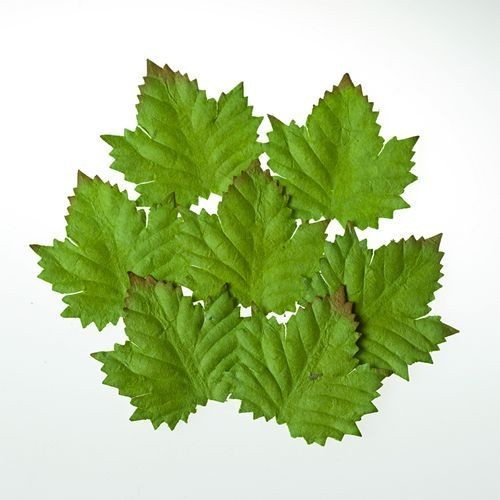 ScrapBerry`s - Set of Leaves - Cedar - SCB300602